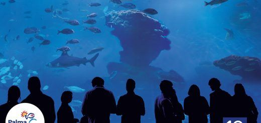 Big Blue 1-Palma Aquarium